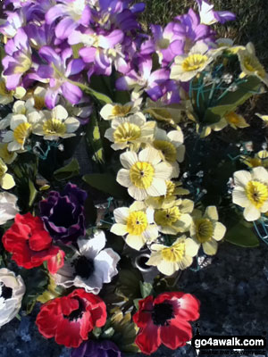 Some flowers in Shawbury Churchyard using the standard iPhone Touch Camera