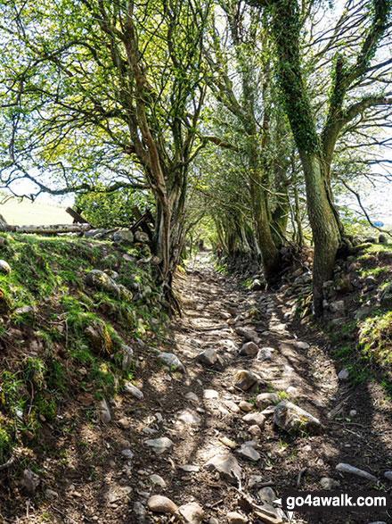 Track leading the way to Foel Fynyddau