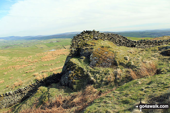 Some impressive stone walling on Ulgraves (Potter Fell)