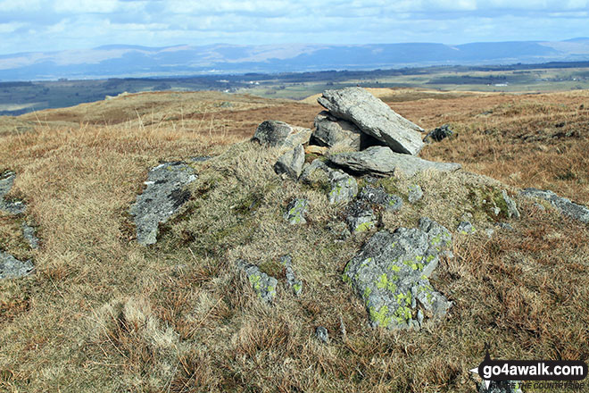The summit cairn on Kit Crag (Naddle Forest)