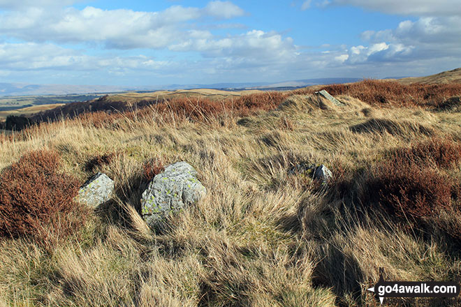 The small cairn on the summit of Kit Crag (Naddle Forest)