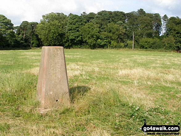 Wendover Woods (Haddington Hill) trig point