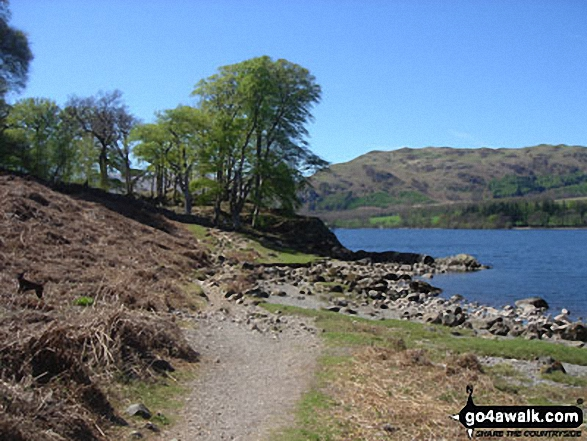 Approaching Hallinhag Wood. Walk route map c304 Beda Head and Place Fell from Howtown photo