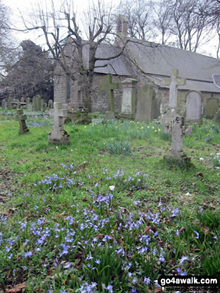 Doddington Church with the Bluebells in bloom