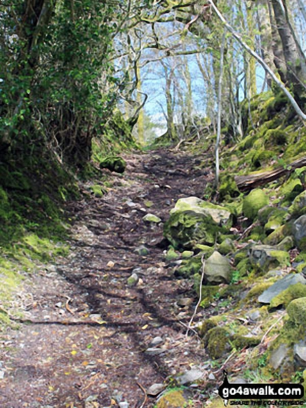 The path between Green Bank Farm and Scrithwaite Farm