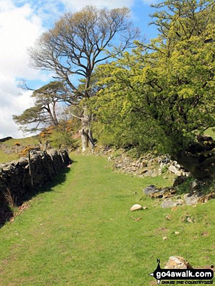 The path across The Nursery