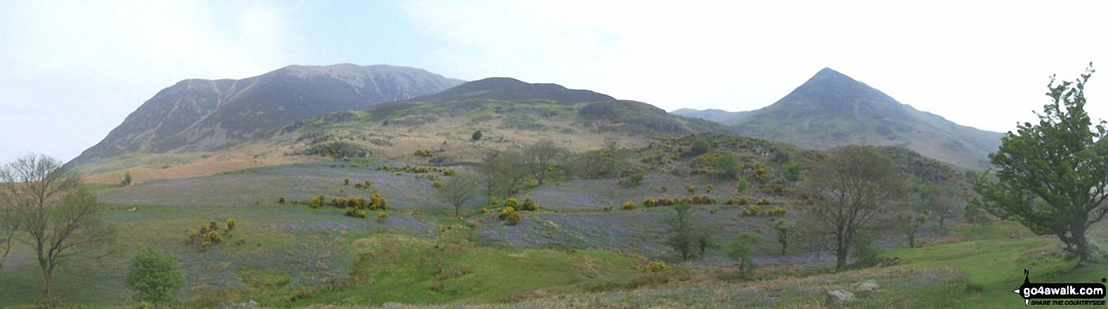 Walk c196 Grasmoor and Rannerdale Knotts from Lanthwaite Green - *Bluebells with Grasmoor, Las Hows and Whiteless Pike from Rannerdale