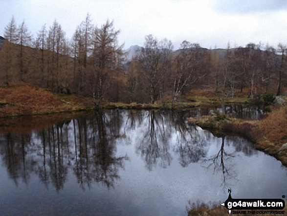 Reflections in Yew Tree Tarn below Holme Fell