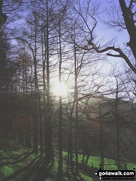 Woodland near Aber Falls