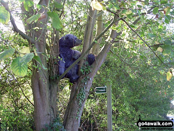 Bear in a tree near Wattisham Came across this, to good to miss photo opportunity. I think our instructions should have read: Bear left at the sign post! It was taken in September this year.