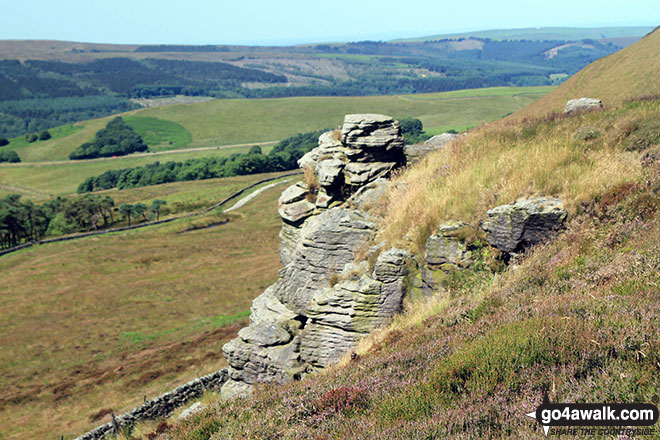 Combs Head (Combs Moss) Photo by Brian Davidson