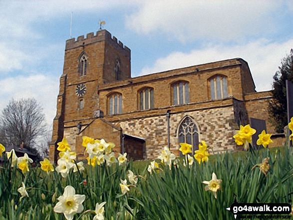 West Haddon with the Daffodils in Bloom