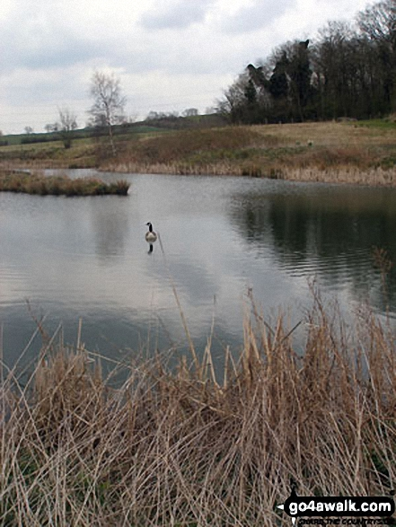 Small Lake in the conversation area near Foxhill Farm, West Haddon