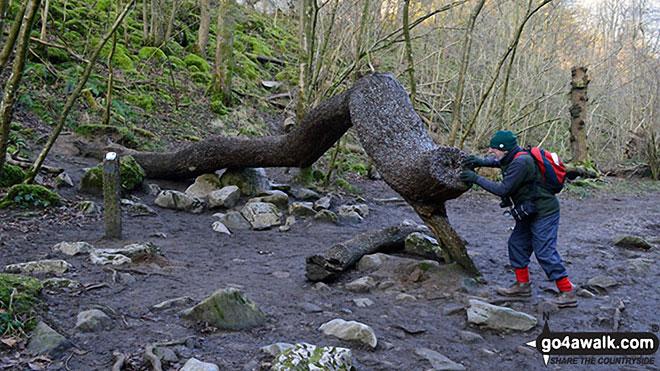 The Money Tree on The Ingleton Waterfalls Trail