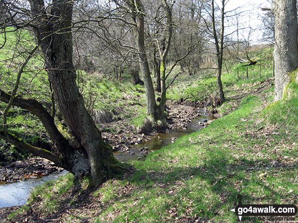 Warslow Brook near Upper Elkstone