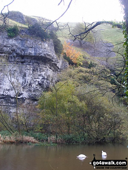 Two Swans in Water-cum-Jolly Dale. Walk route map d265 The Monsal Trail and Taddington from Wye Dale photo
