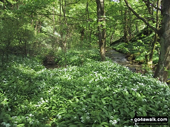Woodland near Malham