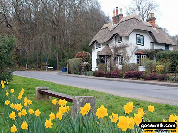 Walk ha109 Lyndhurst Hill and Swan Green from Lyndhurst - Daffodils and a Thatched Cottage at Swan Green, Lyndhurst