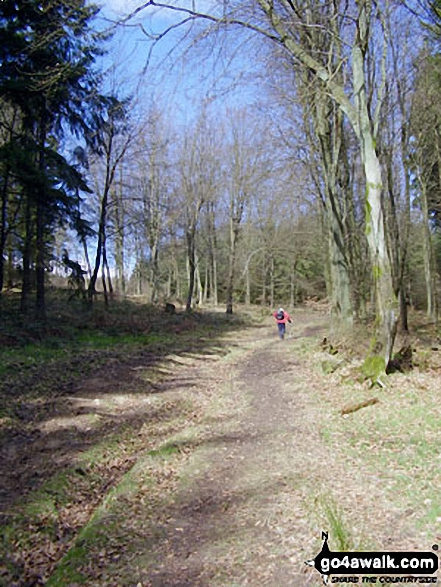 Climbing up through Stanbroughs Wood