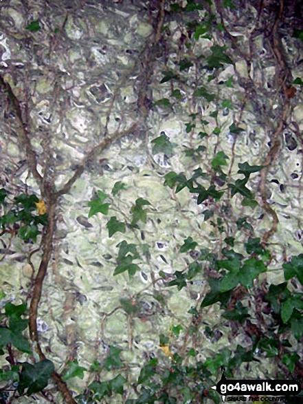 Flint Wall detail near Little Halnaker