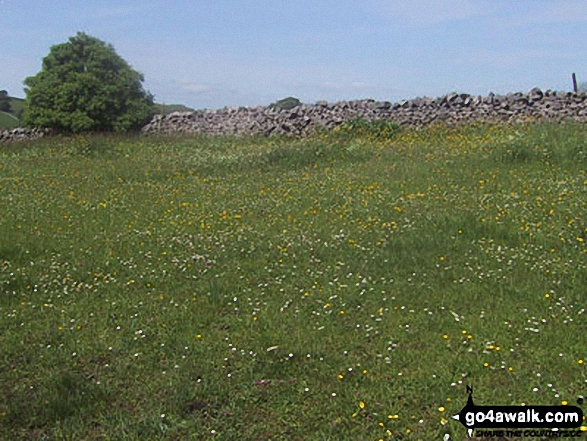 Wild flower field near Embsay