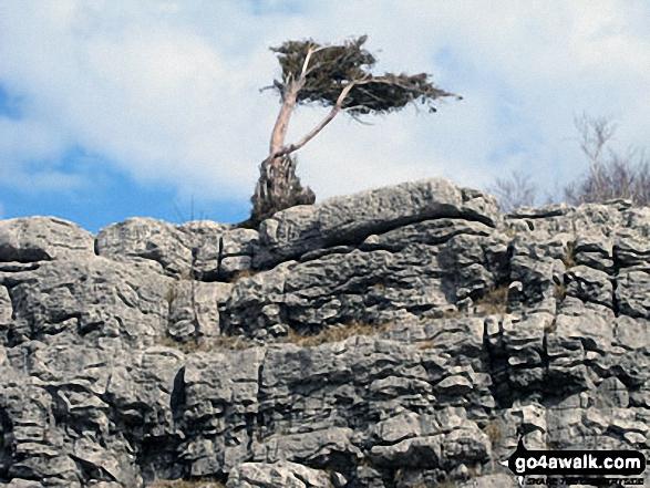 Limestone Edge on Whitbarrow Scar