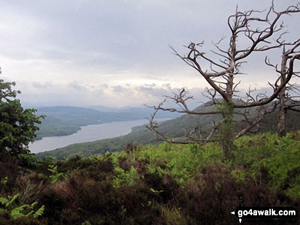 Windermere from 'The Dead Larches' on Staveley Fell