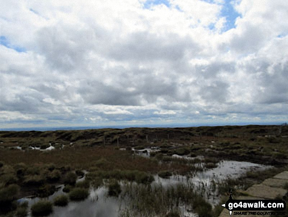 Bog on The Cheviot