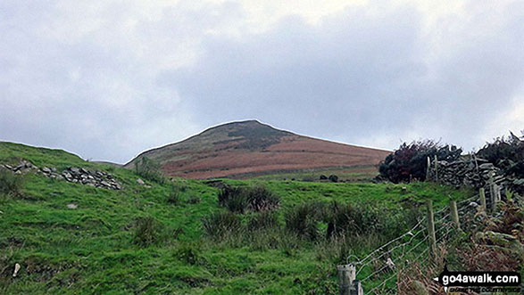 Walk c439 Black Combe and White Combe from Whicham Church, Silecroft - Looking back up to White Hall Knott