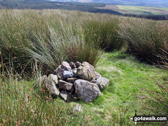 Ponsonby Fell summit cairn almost hidden in long grass