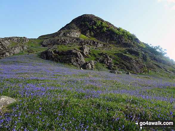 Rannerdale Knotts surrounded by a carpet of bluebells