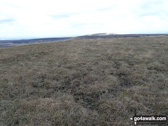 The unmarked grassy summit of Spitlers Edge