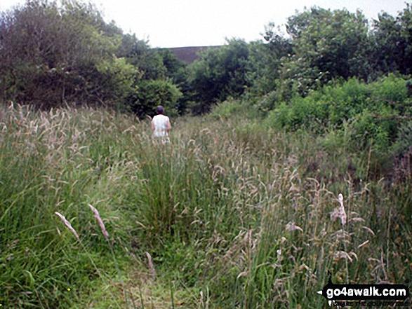 The path towards Longridge Fell from Weedacre Farm. Walk route map l126  Longridge Fell (Spire Hill) from Jeffrey Hill photo