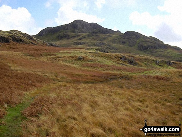 Green Crag (behind right) from Foxbield Moss