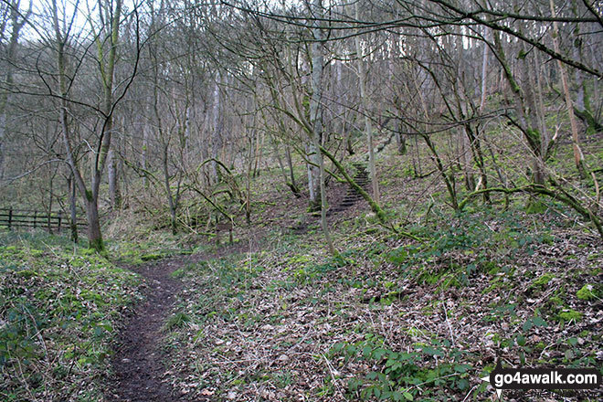 Walk d154 Over Haddon, Sheldon and Ashford in the Water from Bakewell - Great Shackleton Wood