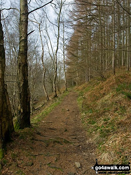 Footpath in Abney Clough