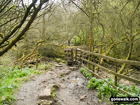 Footbridge in Cressbrook Dale. Walk route map d246 Miller's Dale and Water-cum-Jolly Dale from Tideswell photo