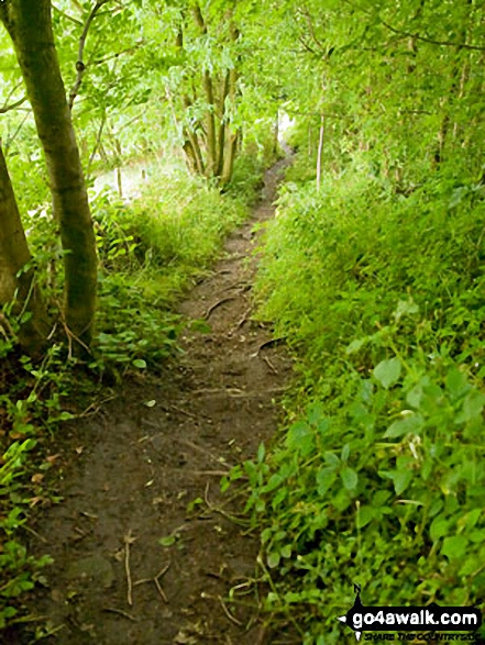 The path out of Sheepwalk Wood