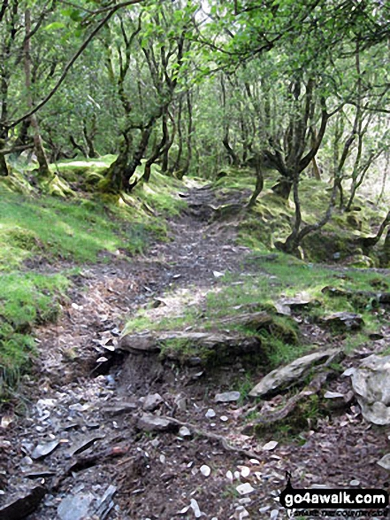 Woodland by Afon Bwlch y Groes near Dolwyddelan