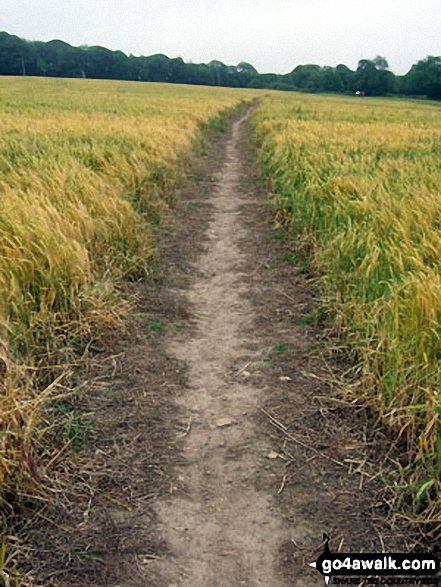 Field path near Thornton-le-Dale
