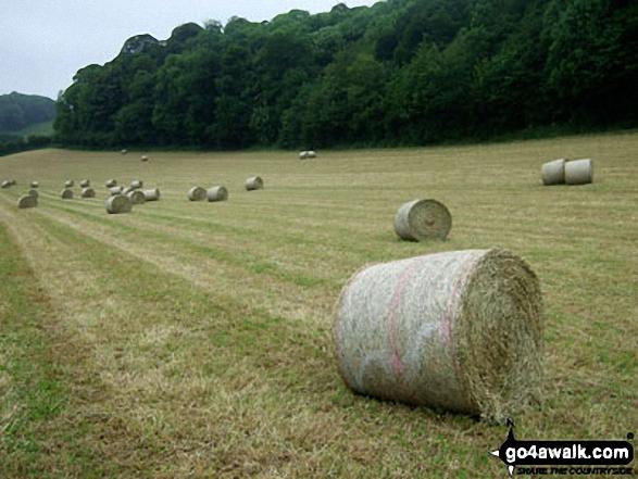 Hay Bales near Ellerburn