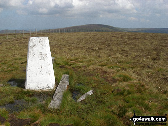 Bloodybush Edge summit trig point with Cushat Law in the distance