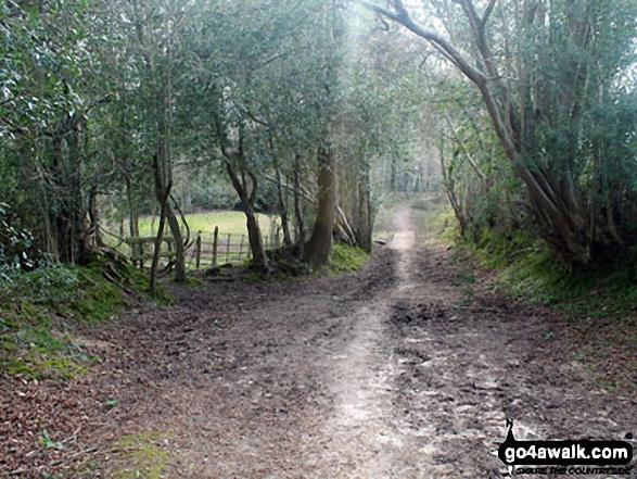 Walk ha109 Lyndhurst Hill and Swan Green from Lyndhurst - Woodland on Emery Down