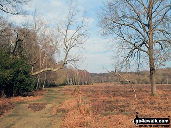 Walk ha109 Lyndhurst Hill and Swan Green from Lyndhurst - White Moor
