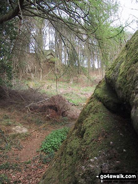 The Suck Stone, Highmeadow Woods