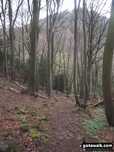 Woodland near Seven Sisters Rocks