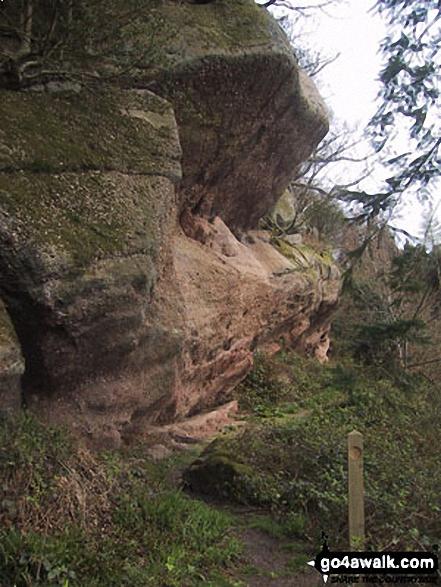 Near Hearkening Rock, Highmeadow Woods