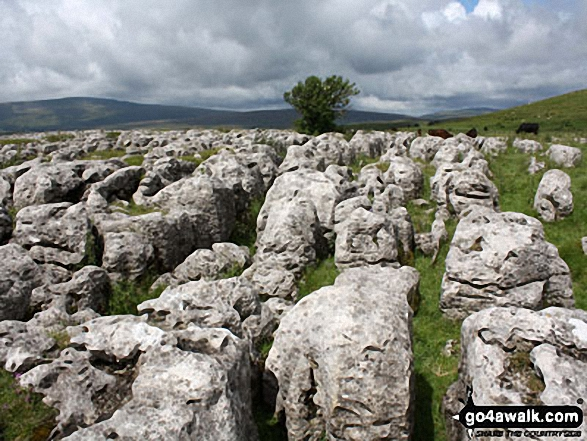Limestone Pavement on way to Whernside