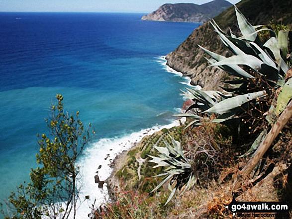 The cliffs between Vernazza and Corniglia, Cinque Terra