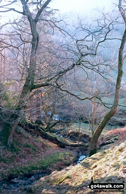Ghyll nr Little Town, Newlands Valley. Walk route map c345 Knott Rigg and Ard Crags from Little Town photo